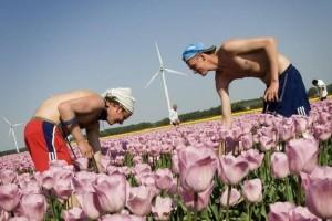 oferty-praca-holandia-rolnictwo