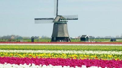 sezonowa-praca-w-Holandii
